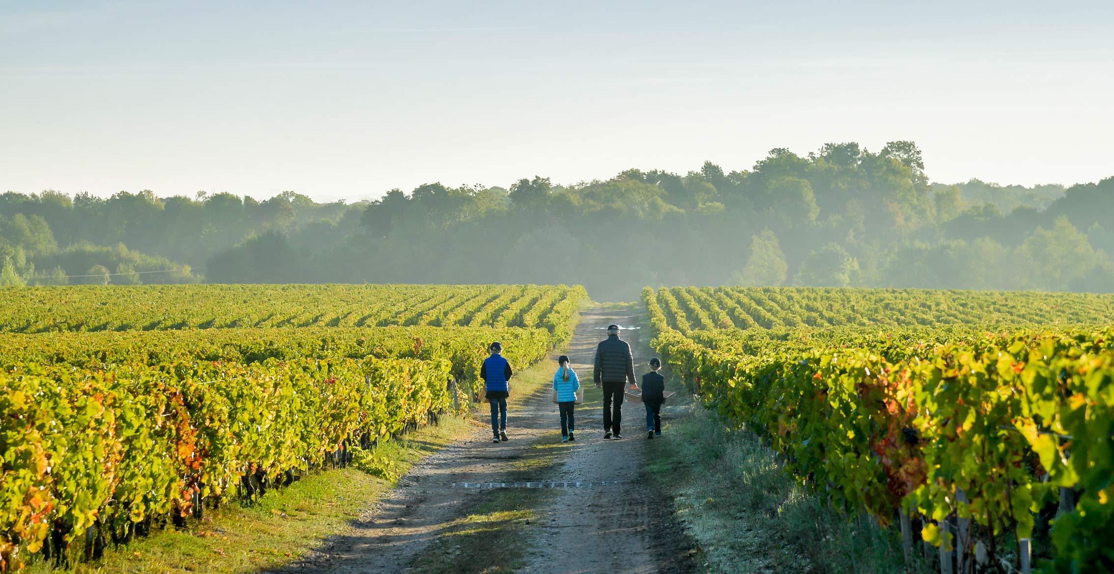 Cos d'Estournel, domaine viticole d'exception, Médoc, Bordeaux